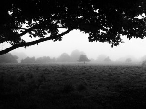 Morning Fog Emerging From Trees by A Guy Taking Pictures